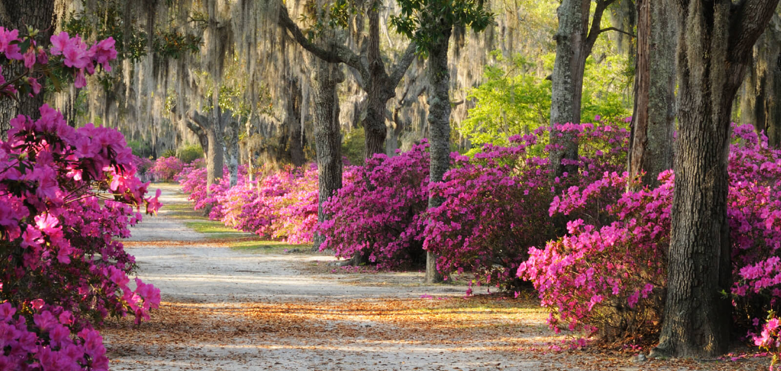 Flowers - Coastal Georgia Home Sales
